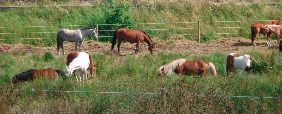Hestehegn
